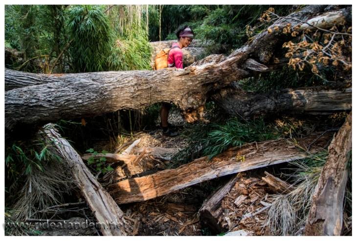 Dann wird klar warum der Trail wirklich gesperrt ist, der Weg ist durch viele umgestürzte Bäume eine wahre Herausforderung und teilweise nur schwer zu erkennen.
