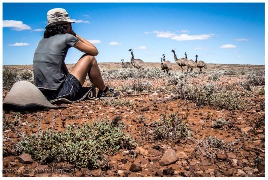 Sobald Mieke mit dem Radeln aufhört, wundern sich die Emus und verlassen uns......