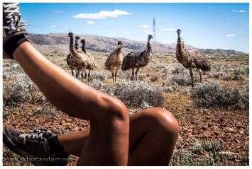 Radfahren interessiert selbst die Emus