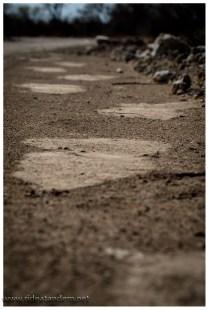 Spuren von Elefanten sahen wir zuerst. Und es ist eigentlich unfassbar wie leise Elefanten gehen.