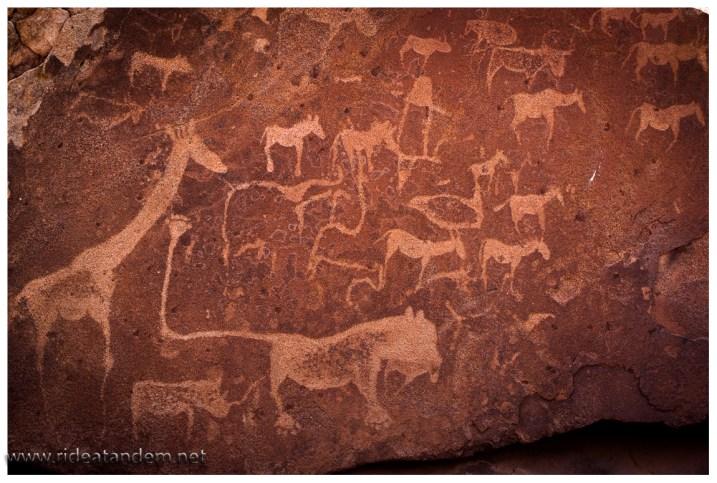 """Der Löwe mit dem extralangen Schwanz ist das """"Wappentier"""" des Nationalparks. Die Bedeutung hingegen ist unklar."""