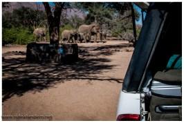 Ein absolutes Highlight, Elefanten laufen über unseren Campingplatz. IRRE