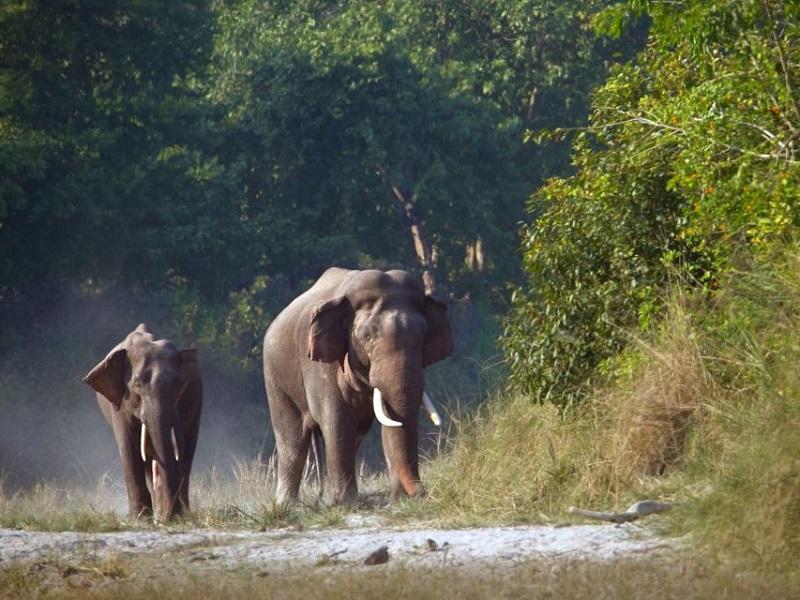 elephants (2)