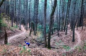 LJSP November Work Party @ Lake James State Park MTB Trails | Nebo | North Carolina | United States