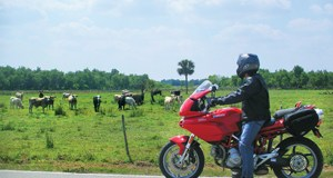 Cows admiring red Ducati Multistrada