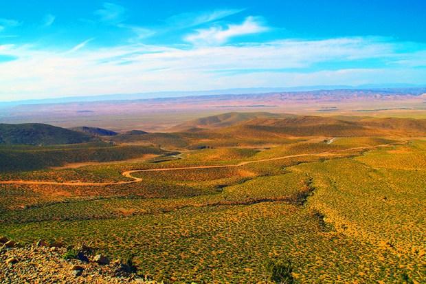 tuareg_rallye_green-desert