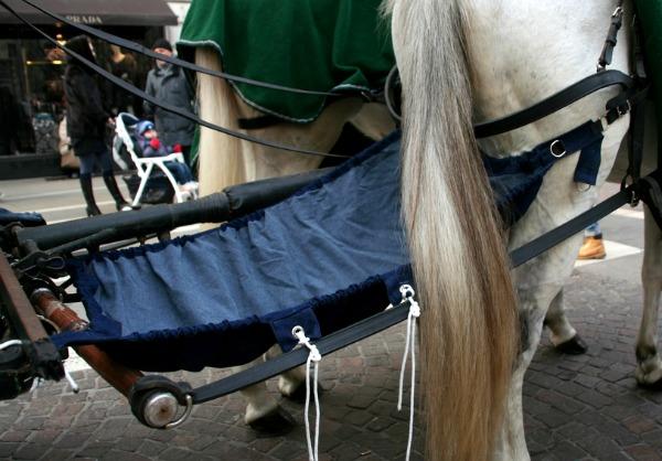 mutande ai cavalli