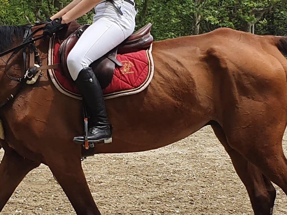 cavallo troppo magro in concorso