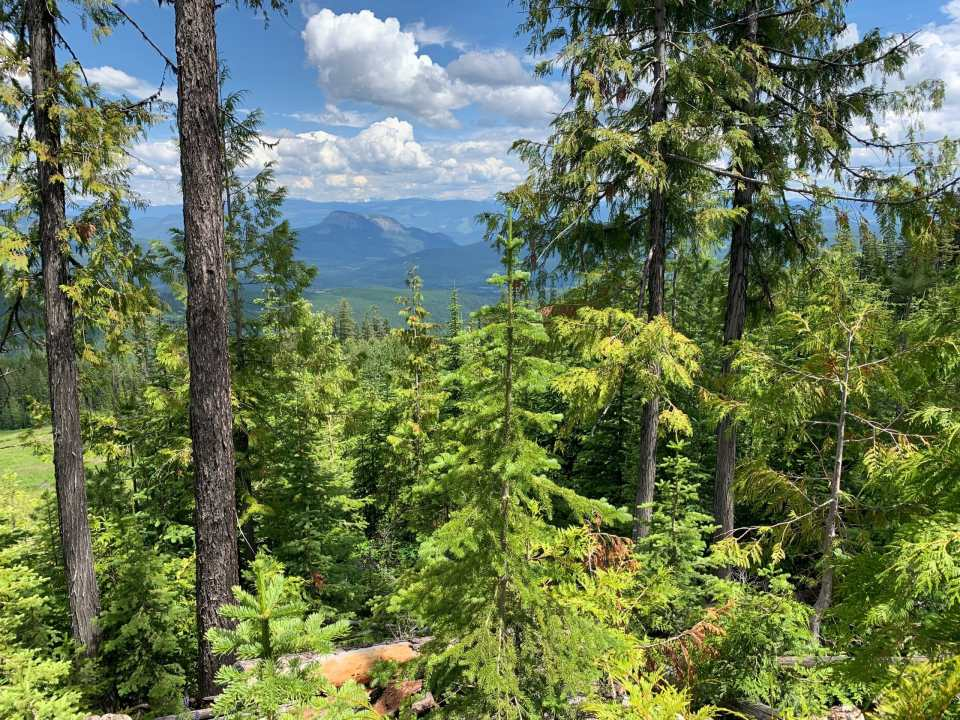 The view from the Aunt Gladys Lookout Trail at SilverStar Mountain Resort