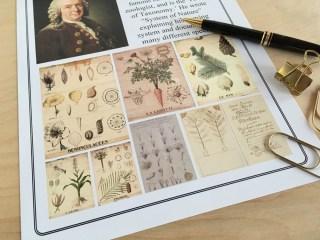 Classical Conversations Cycle 2 fine arts Linnaeus