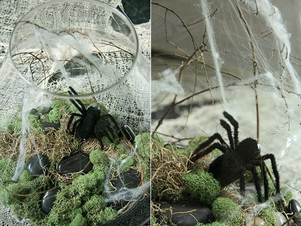 Spooky Terrarium (5) | Ridgely's Radar