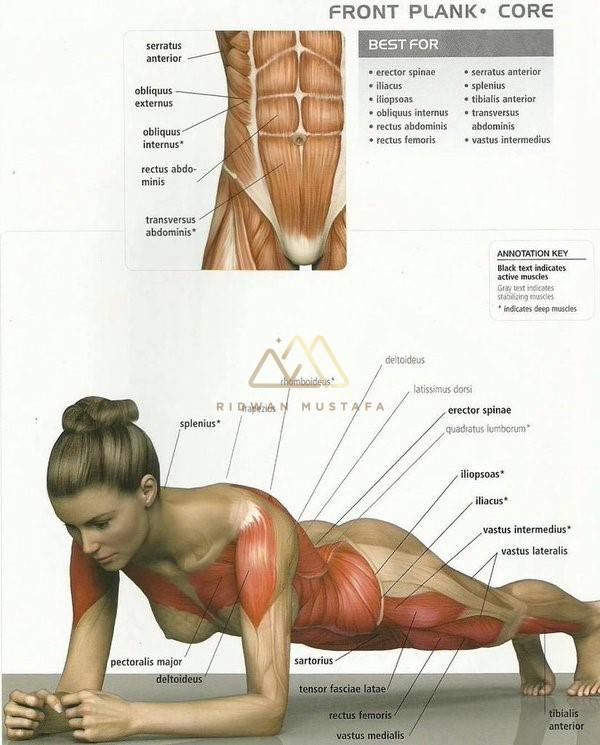 Otot-otot yang terlibat ketika melakukan senaman Plank