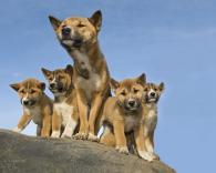 The Island of Wild Dog