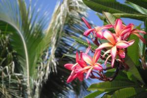 11月30日、ハワイでセミナー!
