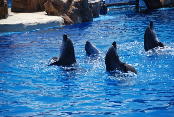 Dolfijnen die samen leren
