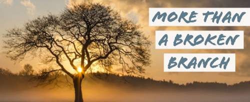 more than a broken branch