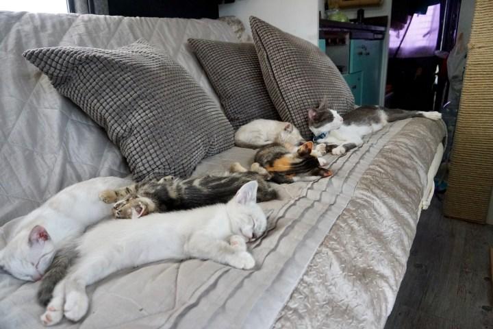 5 cats chilling in diy rv sofa
