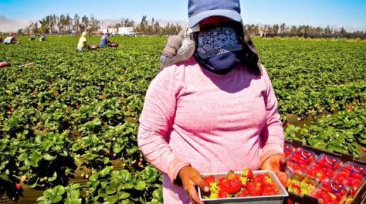 إسبانيا: محاكمة مسؤول عن مزرعة بتهمة التحرش والاعتداء جنسيا على أربع عاملات مغربيات