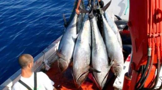 انطلاق عملية صيد سمك التونة الحمراء بسواحل اقليمي الحسيمة والدريوش