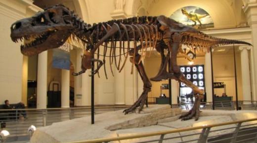 مديرية الأمن بخصوص الأمريكي المتهم بسرقة ديناصور مغربي