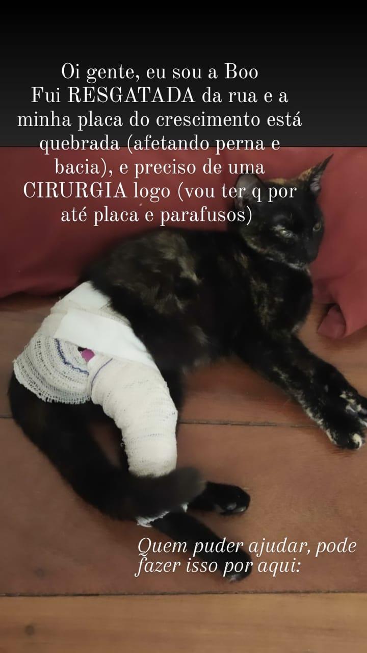 Foto  - [CANCELADA] Rifa para Cirurgia da Gatinha Boo