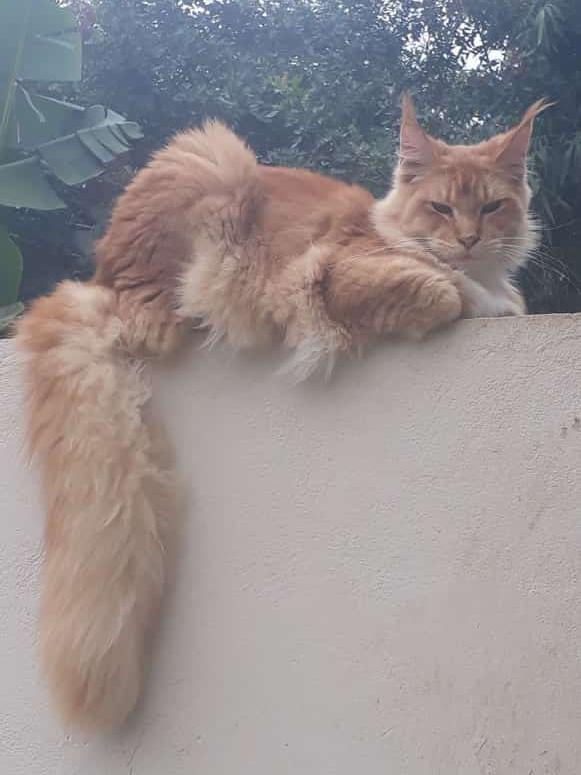 Foto  - Rifa para ajudar o Gato Lyon