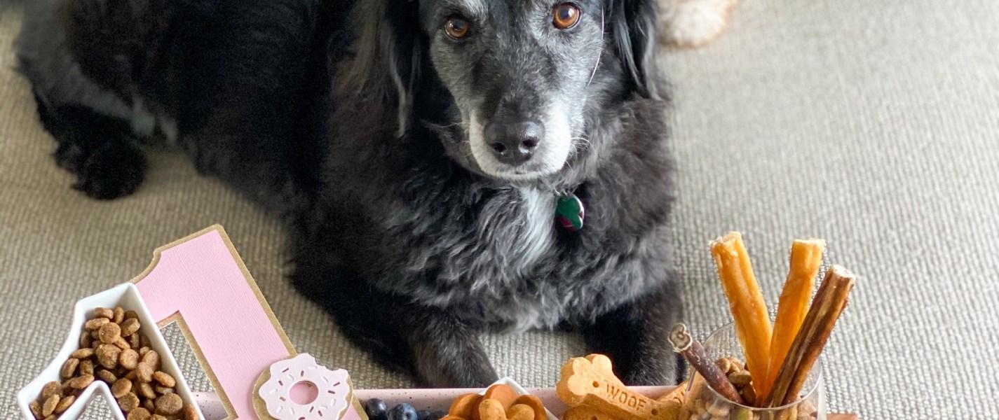 Bella's 11-ish charTREATerie Birthday