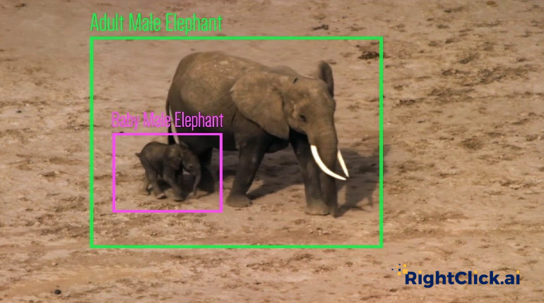 How AI can protect Wildlife - RightClick.AI