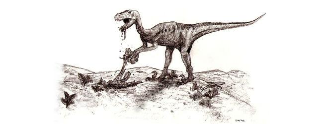 Sketch of deinonychus, Tim Bekaert, 1996 edit