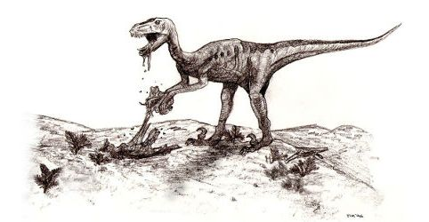 Sketch of deinonychus, Tim Bekaert, 1996 edit