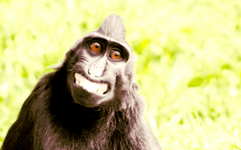 Smiling ape by Tim Simpson v3