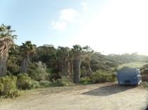 Copse, Rice Canyon, Chula Vista