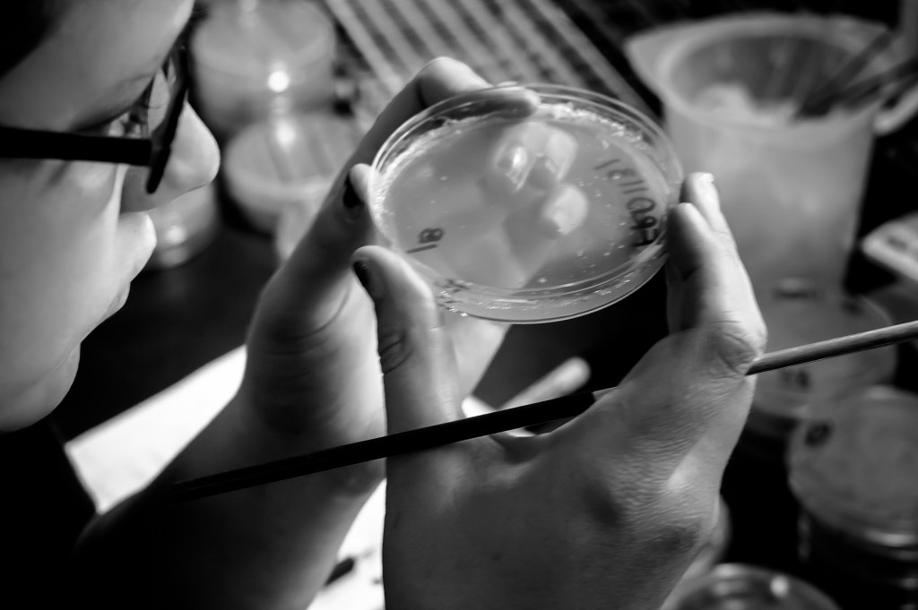 This is a black and white image showing a person holding a petri dish up close to observe the liquid substance inside it. The person has a long, thin instrument in their right hand.