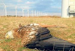 Windmills Kill