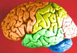 Human-Brain-300x208