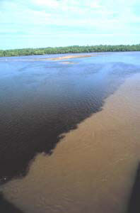 Mississippi River DeadZone