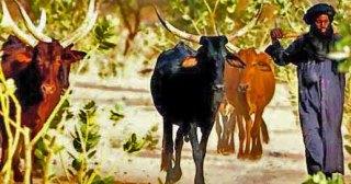Ethnic-Fulani-Muslim-herdsman.-Wikipedia
