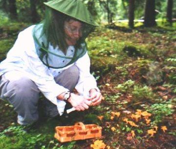 Mygghatt är ett måste i Närkeskogen.