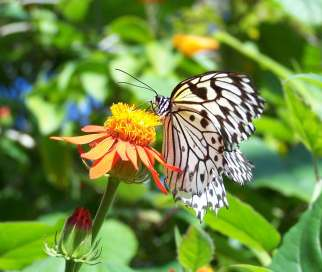nature-butterfly