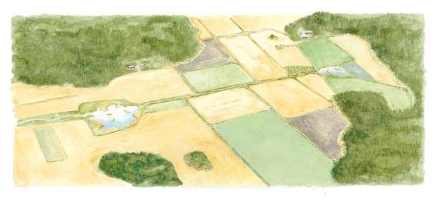 ...man i arbetet inom jordbruket vill ge viltet en chans till framgång.