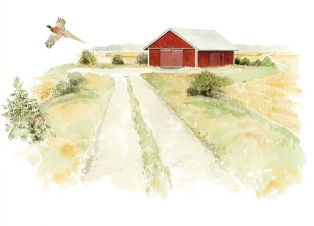 Ladot ja muut maatalouden rakennelmat lähiympäristöineen ovat riistaeläinten tärkeitä suojapaikkoja. Ladon alle pääsee petolintuja piiloon, ja seinusta tarjoaa suojaa talven viimalta. Suojapuskat, erityisesti marjoja tuottavat pensaat, lisäävät latosaarekkeiden arvoa elinympäristönä. Piirrokset: Tom Björklund