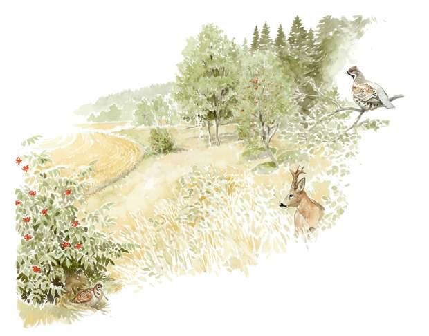 Metsien reunavyöhykkeiden avaaminen puoliavoimeksi ja hakamaiseksi luo riistalle hyödyllisen vaihettumisvyöhykkeen talousmetsän ja peltoaukean välille. Reunavyöhykkeen harva ja matala puusto parantaa myös peltojen viljeltävyyttä puuston varjostuksen vähenemisen ja ilmakierron paranemisen myötä.