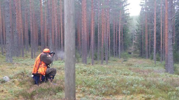 Uutena metsästyksenjohtajan vastuulle säädettävänä tehtävänä on huolehtia siitä, että mahdollisesti metsästyksessä emänsä menettäneet vasat pyritään pyytämään. Kuva: Anselmi Anttila