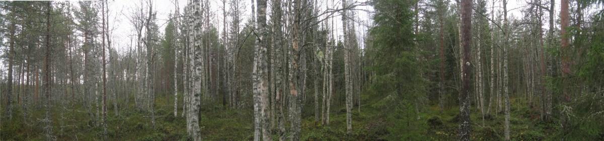piililammen-suon-lounaisreunaan-lehtipuuvalt-saastoalue-11-10-12-jsiekk