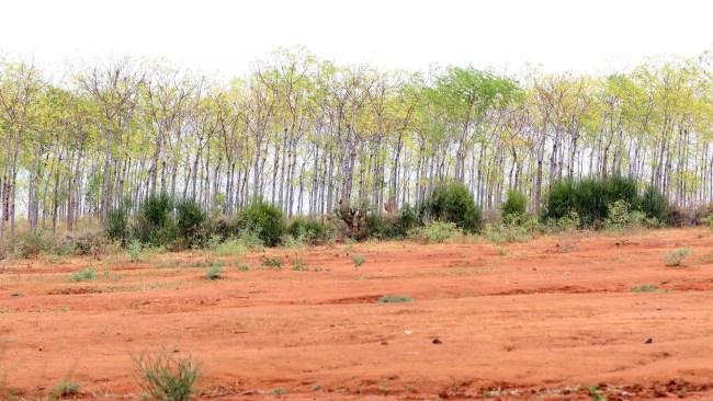 Gränsen mellan var plantagen börjar och marken runt om som inte går att använda till mat, boskap eller något annat.