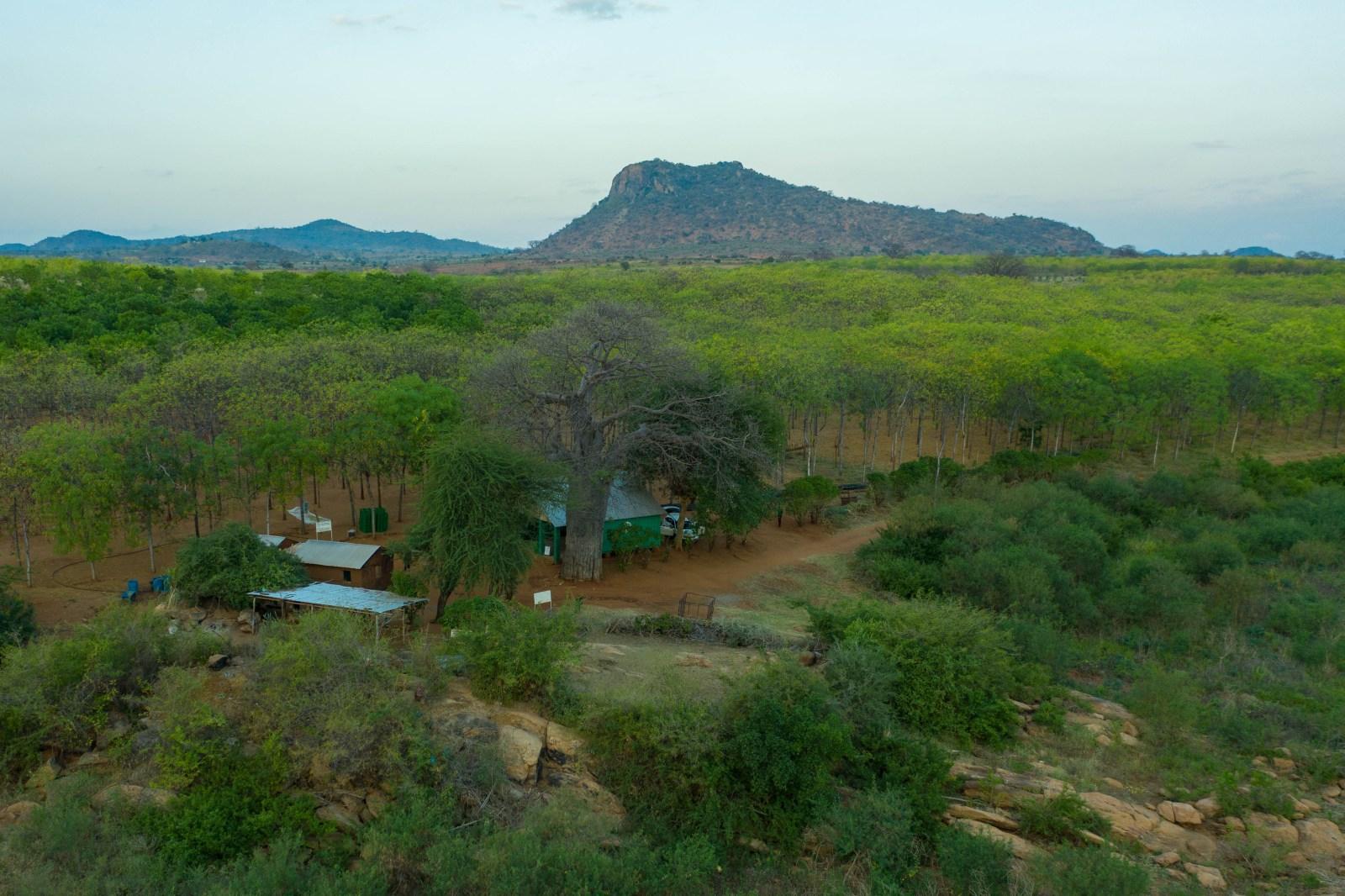 Kontoret på Better Globe-plantagen i Kiambere