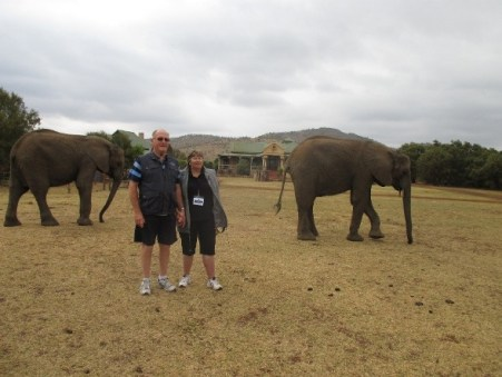 With the Elephants-1