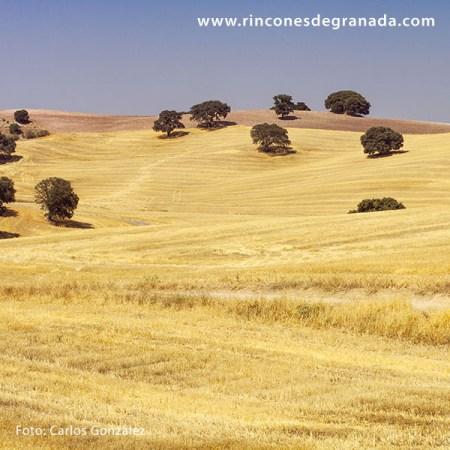 LAS SIETE VILLAS - El Granero de Granada