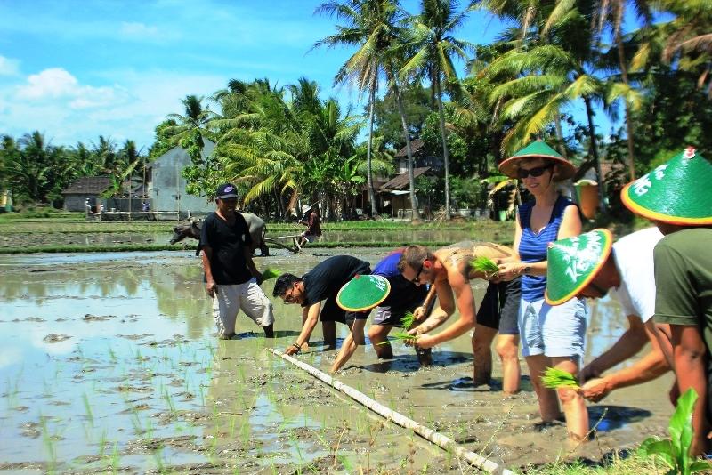 wisata pertanian internasional