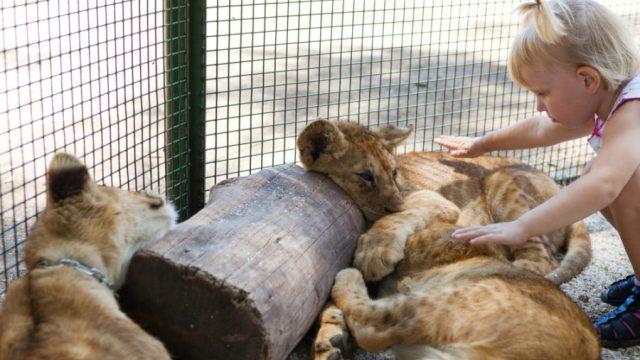 Lion Media子テーマ